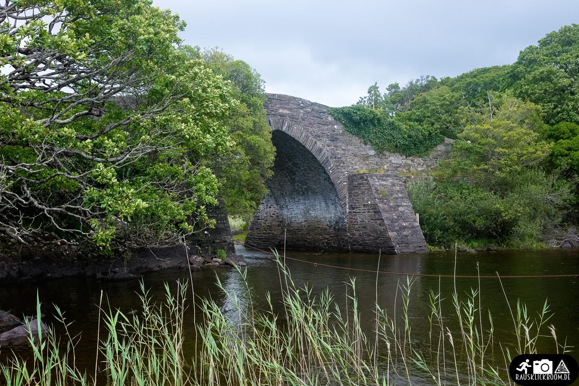 Irland-Killarney_National_Park-8