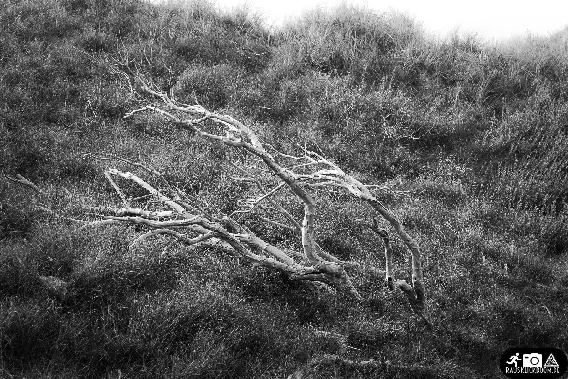 Toter Baum in den Dünen von Norderney